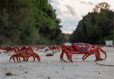حواستون به خرچنگ ها ی زندگی تون باشه